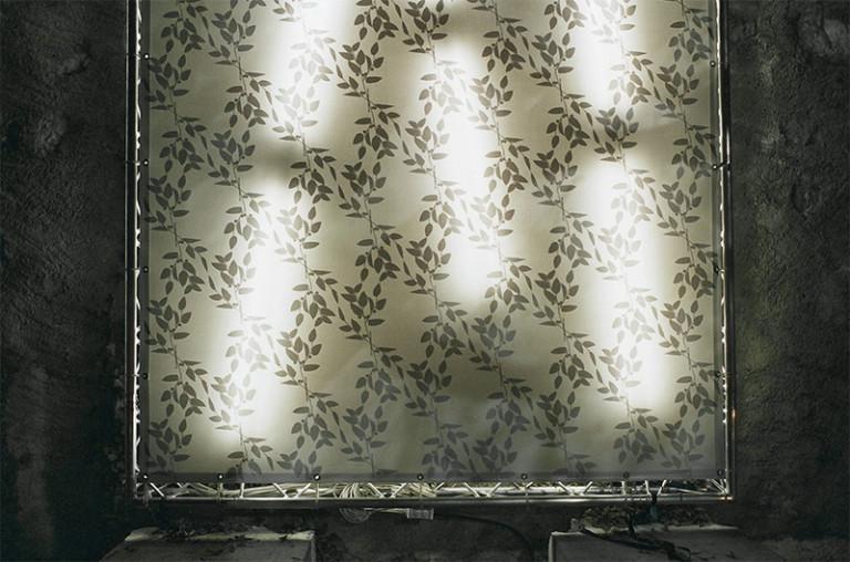 Jean Stern Arbres et lumières